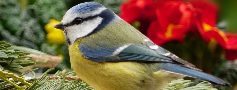 How to Make Your Backyard Bird Friendly