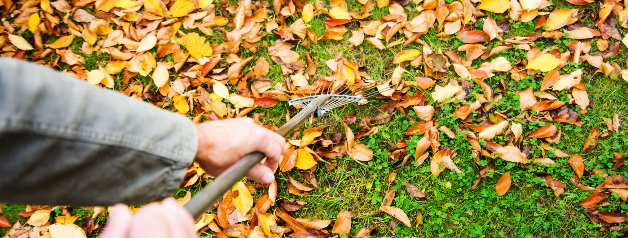 Eco-Friendly Ways To Deal With Fall Leaves In Your Backyard