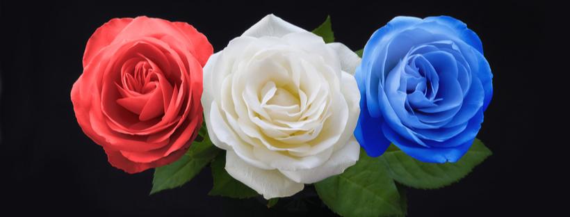 Red, White & Blue Roses