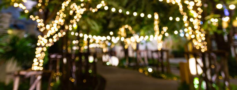 Decorative string lights on trees